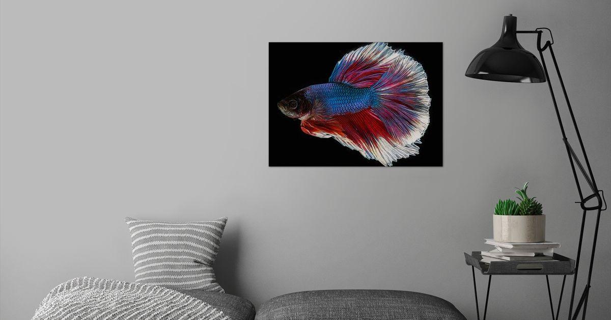 7,8x11,8 x3 Kein Rahmen Liang/Ni/Inc Abstraktes Tier Betta Fisch Leinwand HD Drucke Bilder Wandkunst Poster Gem/älde Wohnkultur f/ür Wohnzimmer Wohnung 20x30 cm