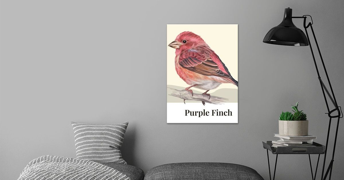 Purple Finch Bird Poster Art Print By Human Shadow Displate
